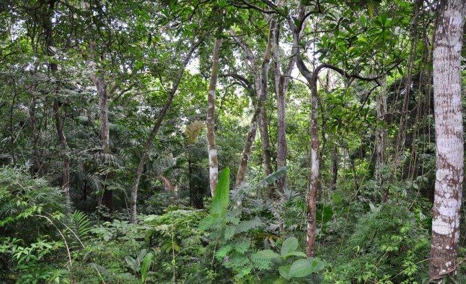 Selva Panamá - Google