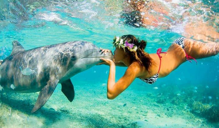 Nadar con delfines es una experiencia única y especial (hthayat)