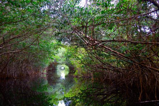 Lugares únicos de Cuba: la Laguna Redonda