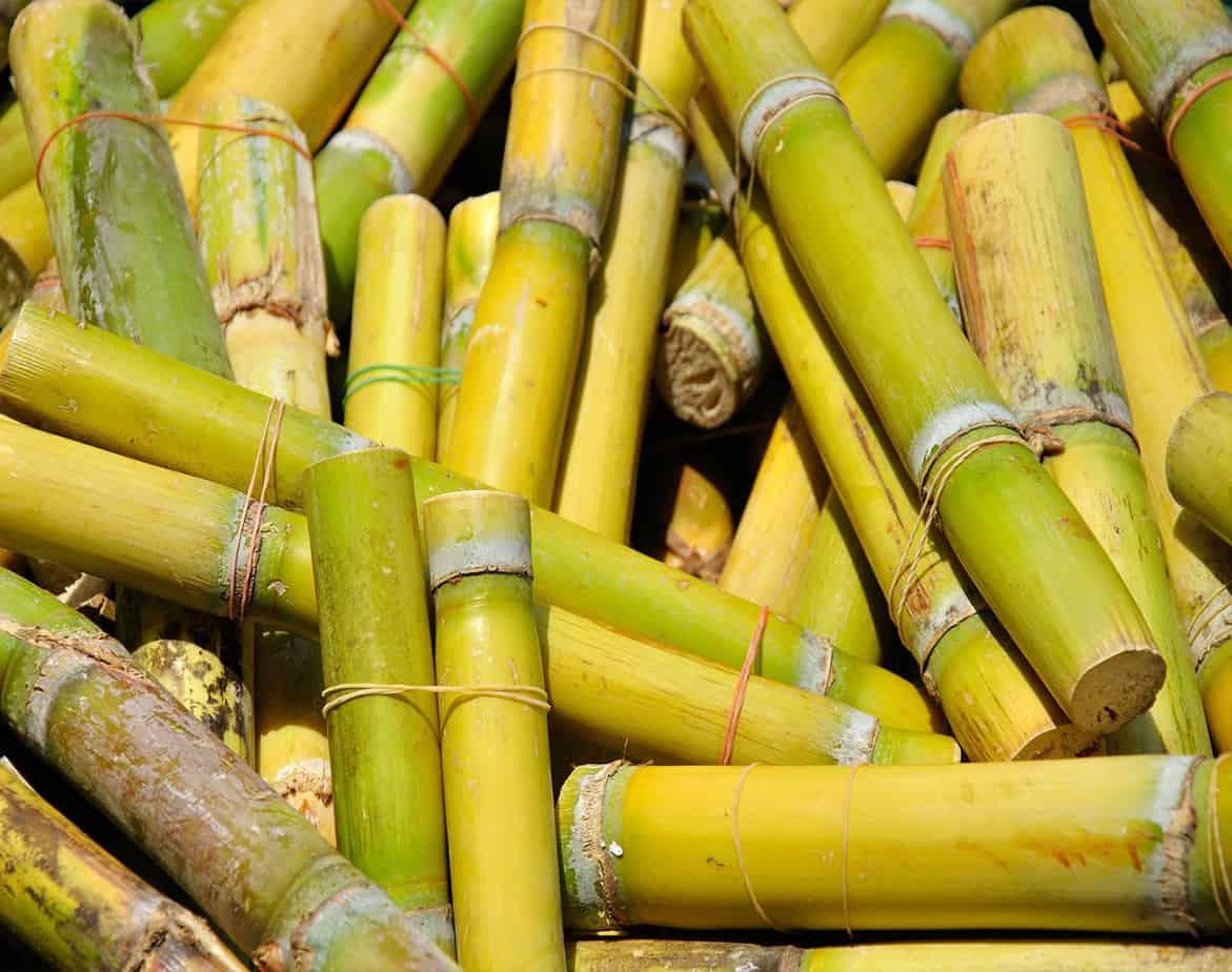 Cuba quiere convertirse en el mayor exportador de azúcar de caña del mundo
