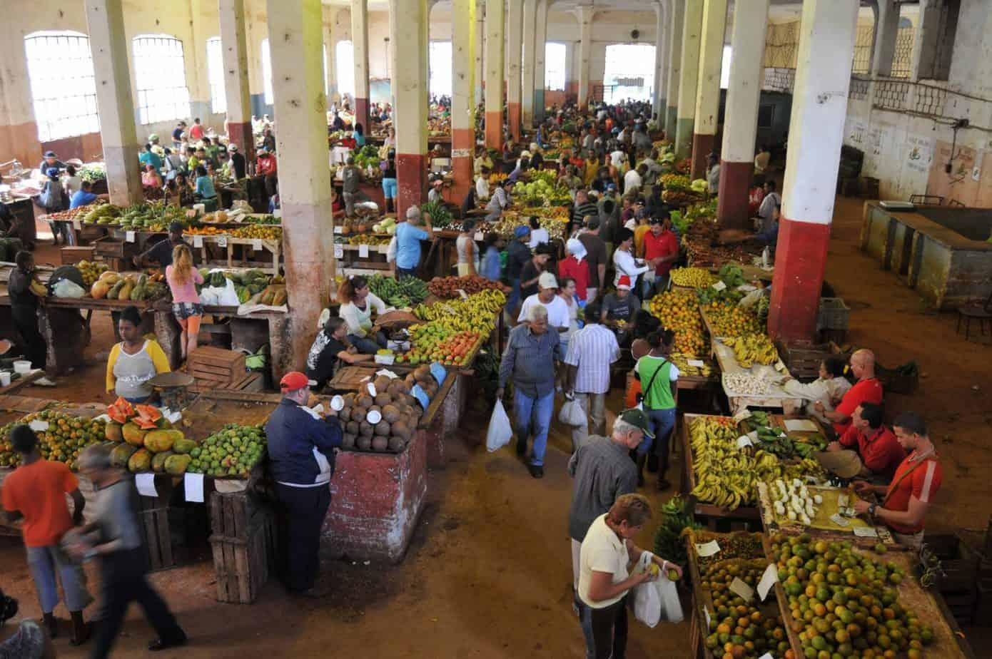 Programa Mundial de Alimentos colocó a Cuba en lista de amenaza alimentaria hasta 2080 ¿Estás de acuerdo?