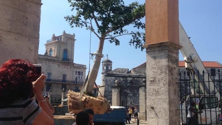 El histórico Templete de la Habana ya tiene nueva ceiba