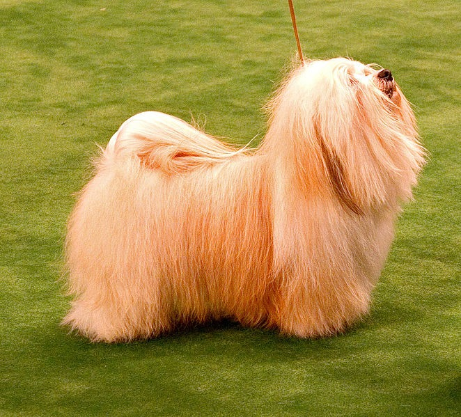La raza de perro originaria de Cuba