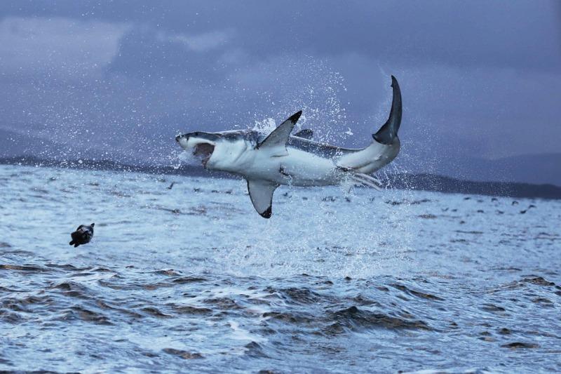Ataques de tiburones en Cuba