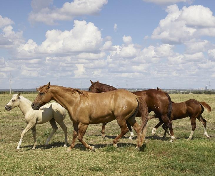 4 caballos famosos en la historia de Cuba
