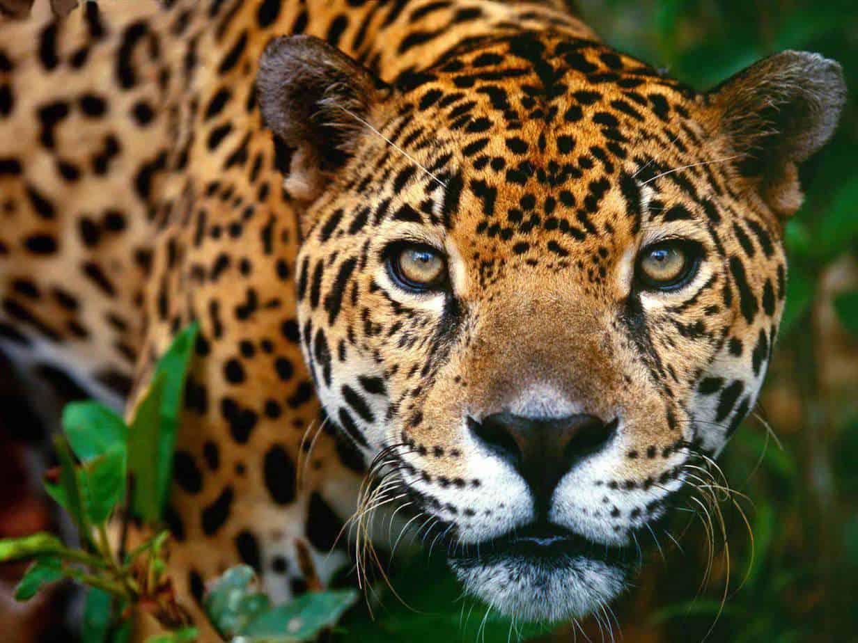 Empresario de Cuba y México firman interesante convenio que permitirá intercambiar especies vivas de la fauna