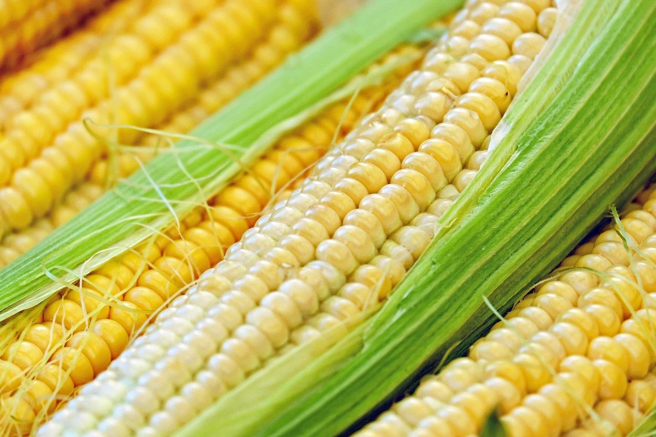 postres cubanos con maíz