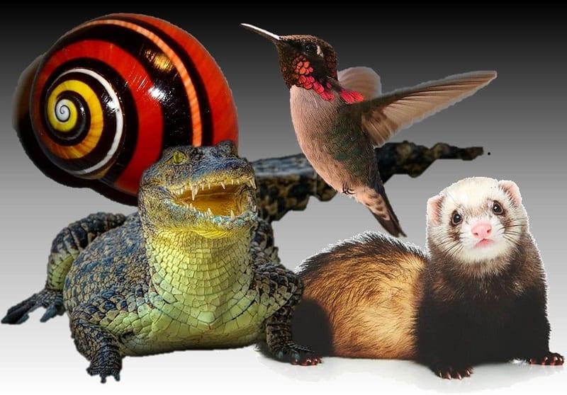 Animales que solo puedes ver en Cuba