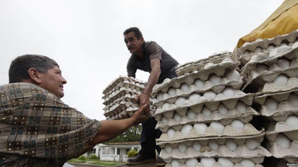 Adoptan nuevas medidas ante la no comercialización de huevo liberado en Cuba