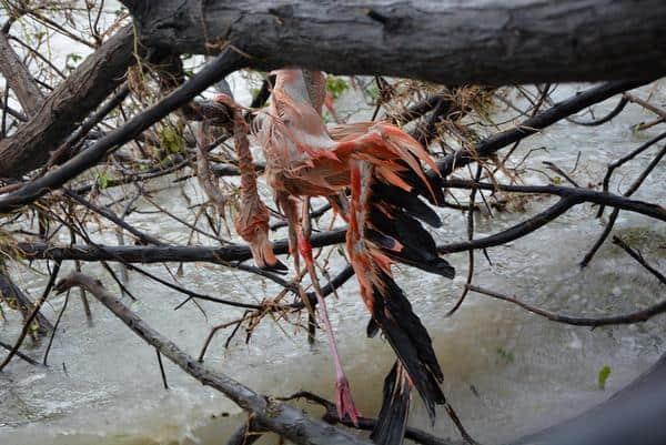 Reportan, tras investigaciones, que el huracán Irma dañó seriamente el ecosistema de Camagüey