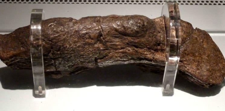 Este es el excremento humano fosilizado más grande que se ha conseguido
