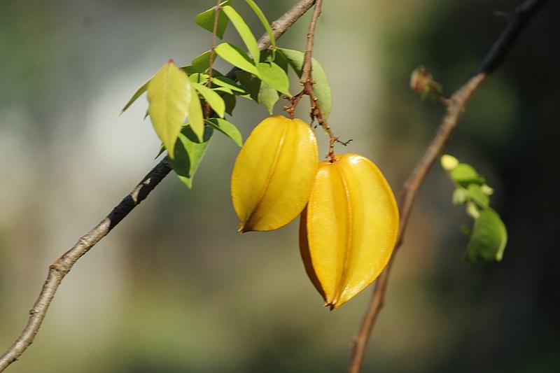 La carambola es una fruta seduce por su agradable olor