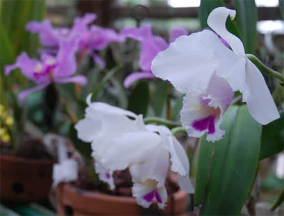 Soroa: un paraíso entre orquídeas y cascadas