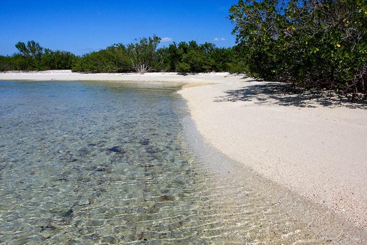 Cayos de Ana María, refugio paradisíaco de la fauna cubana