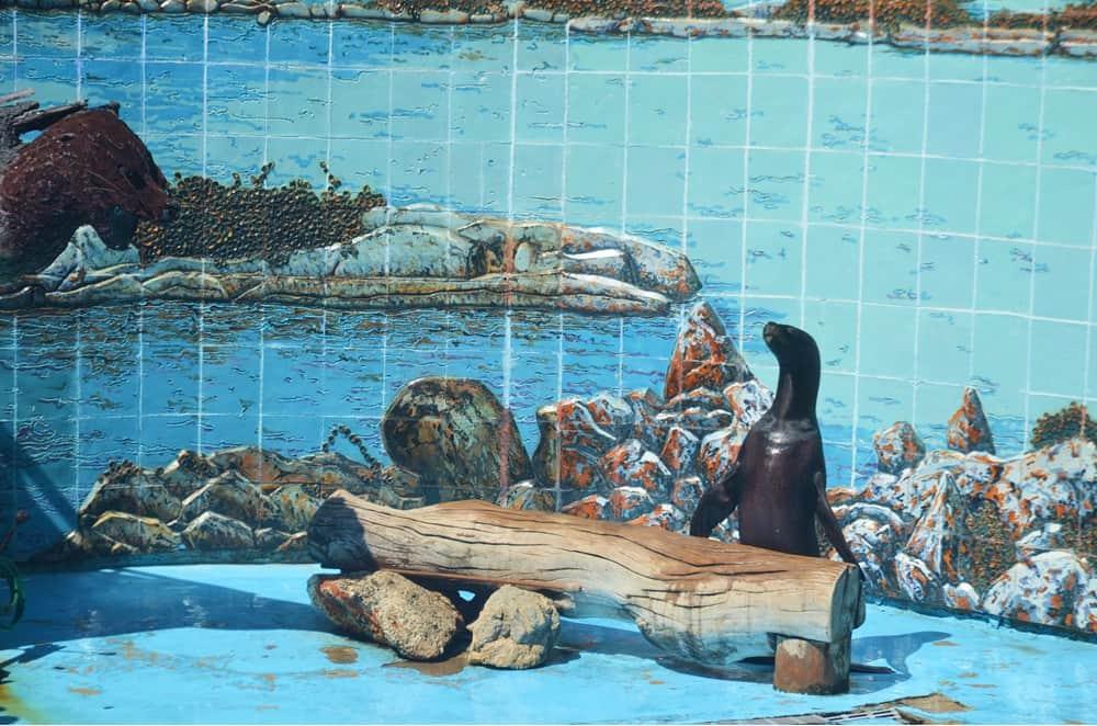 Recordando a Silvia, la más famosa de las focas de Cuba