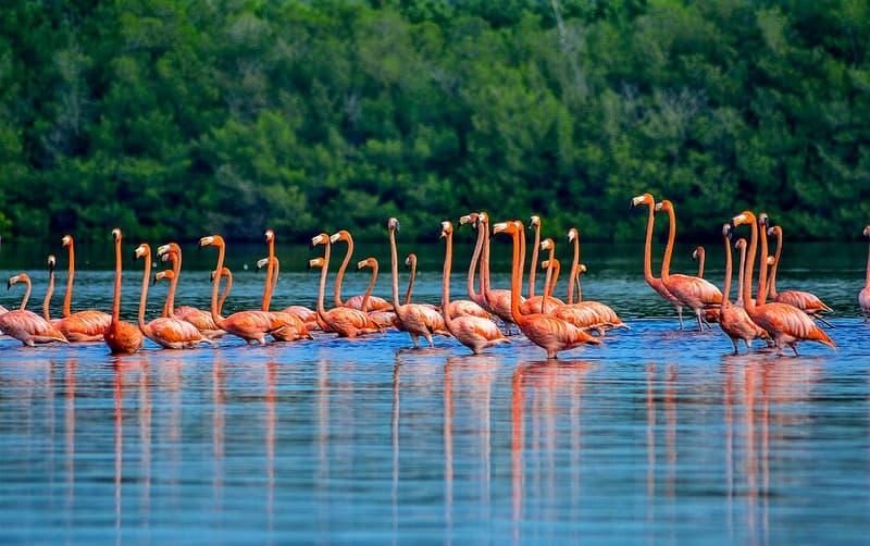 Laguna de Guanaroca: No te pierdas este exclusivo destino para los amantes del turismo de naturaleza en Cuba (+ Video)