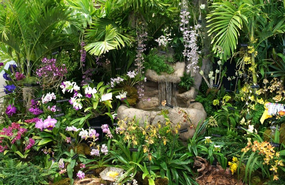 Soroa, el paraíso de las orquídeas en Cuba