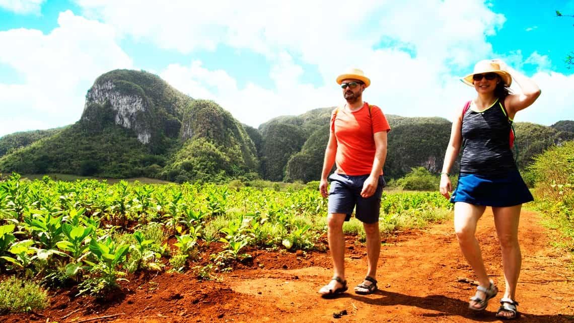 La Ruta del Tabaco, el recorrido que te lleva por los cultivos donde se produce la materia prima de los mejores puros del mundo