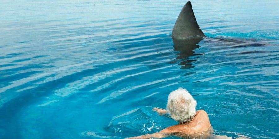 Todo lo que debes saber sobre los ataques de tiburón en Cuba (especies más peligrosas, historia y más)