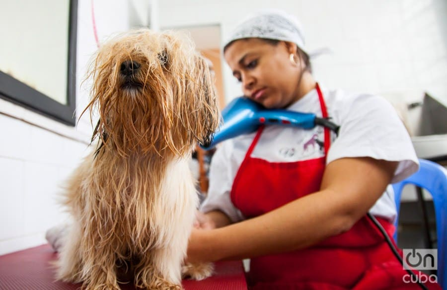 Peluquería de mascotas en Cuba