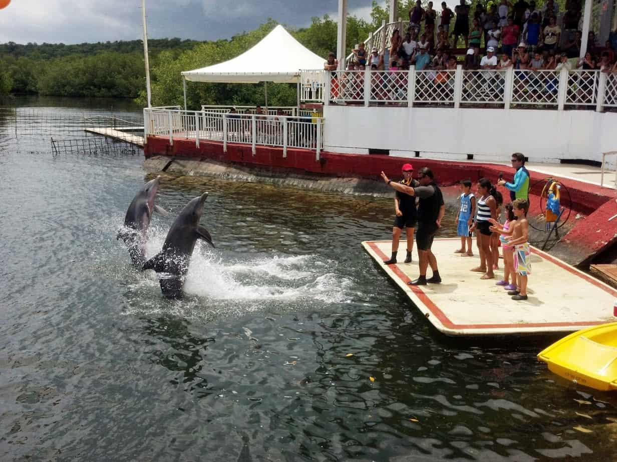 Conoce la magia del Delfinario de Cienfuegos, una de las grandes atracciones de la provincia (+ Videos)
