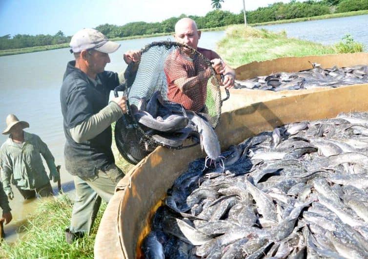 """Pescar clarias en Cuba, una curiosa forma de """"lucharse la vida"""""""
