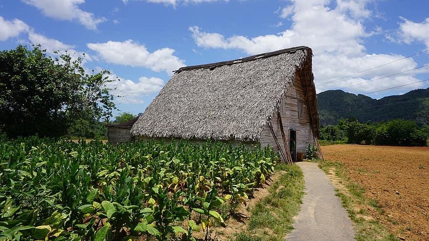 Granja de tabaco en Pinar del Río