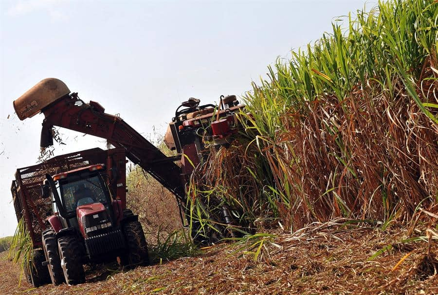 Prosigue la cosecha azucarera en Cuba pese a dificultades