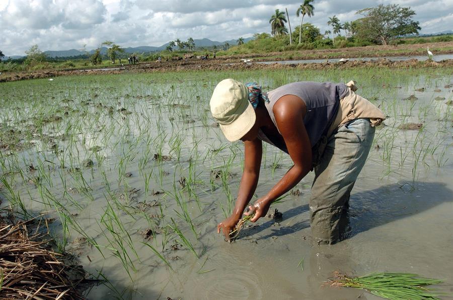 FAO y Cuba acuerdan 119 millones de dólares para cambio climático