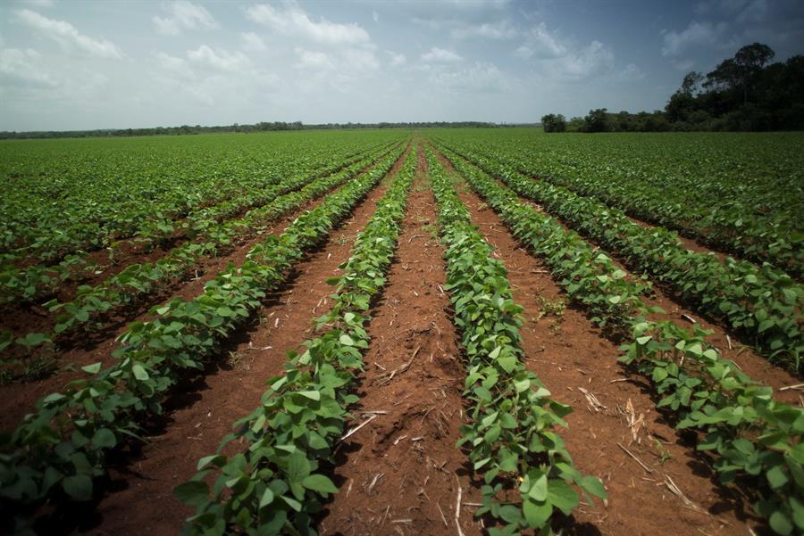 Cuba abre la puerta a cultivos transgénicos