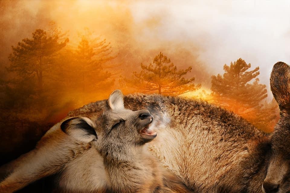 Voraces incendios arrasan Australia