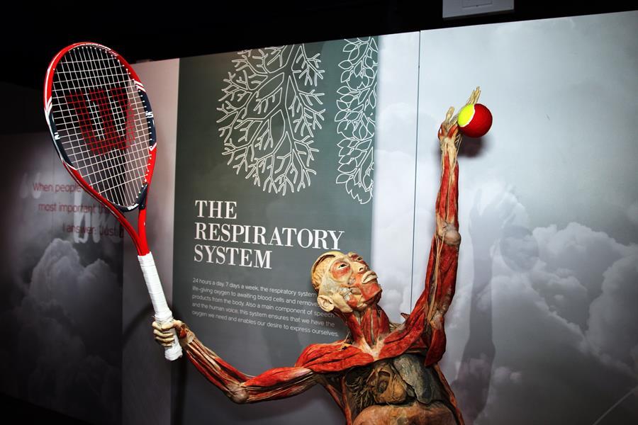 Bodies, la exhibición de cuerpos humanos que ahora incluye efectos del coronavirus