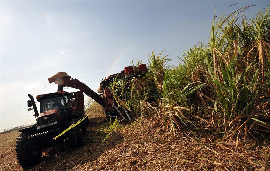 Cuba proyecta producir 1,2 millones de toneladas de azúcar